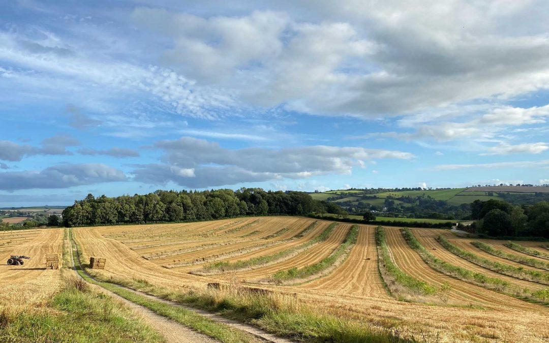 Regenerative Food and Farming