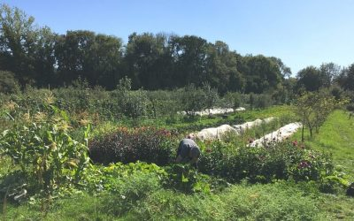 Regenerative Farming – Graduate Research Assistantships for 2022