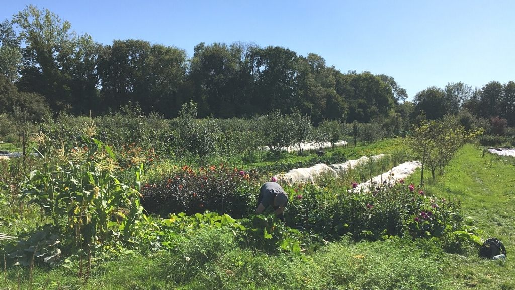 Grower in our growing space, Henri's Field