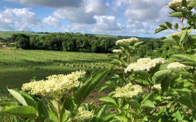 Regenerative Food, Farming and Enterprise